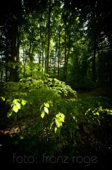 roge-landschaft-natur-065.JPG