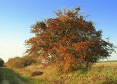 roge-landschaft-natur-069.JPG