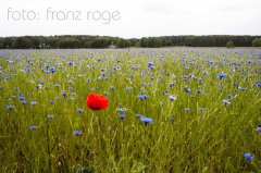 roge-landschaft-natur-077.JPG