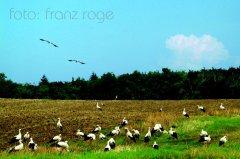 roge-landschaft-natur-184.JPG