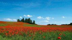 roge-landschaft-natur-227.jpg